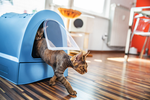 Adopter un chat : les accessoires importants et indispensables