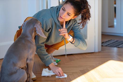 Les techniques de dressage de chien