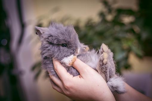 Comment élever un lapin nain en appartement ?