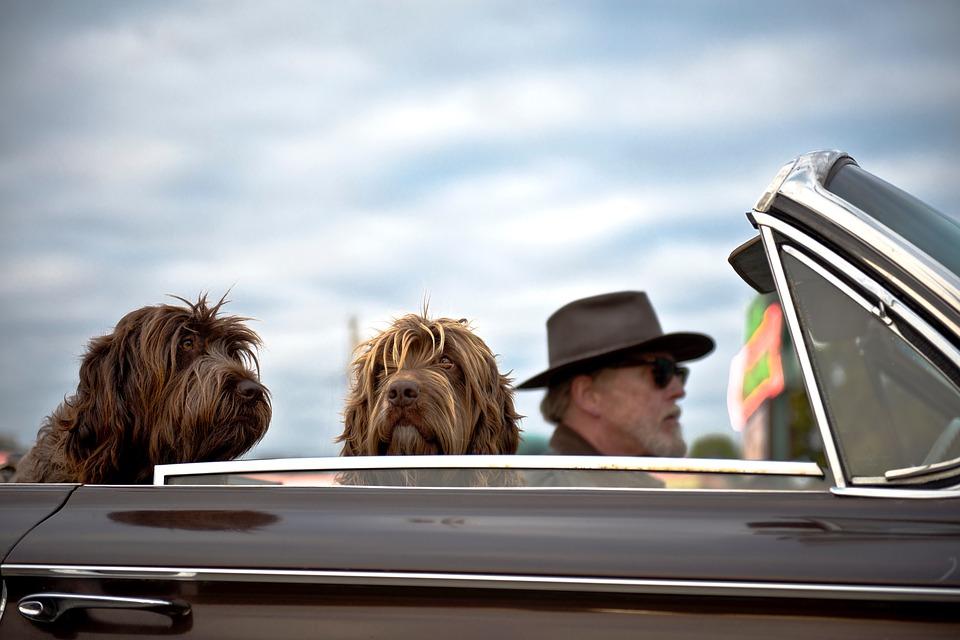 Le chien et le voyage, ce qu'il faut savoir