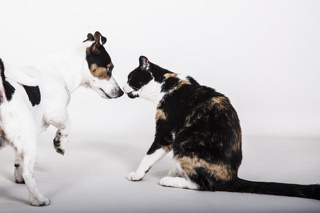 Canin et félin : un dressage réussi