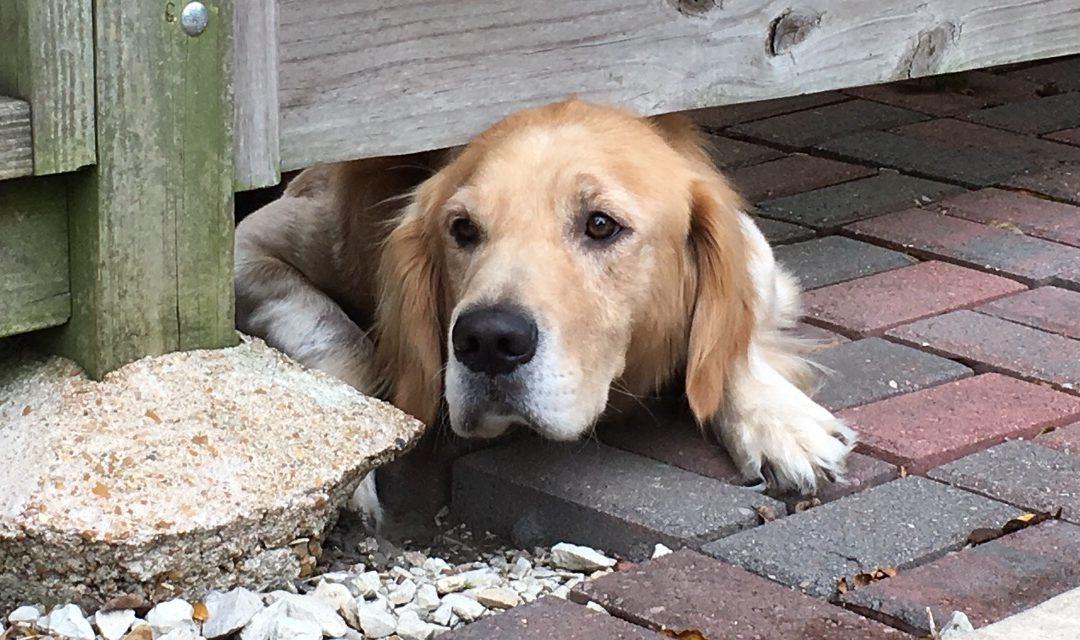 Investir dans une clôture anti fugue pour préserver la sécurité de votre animal