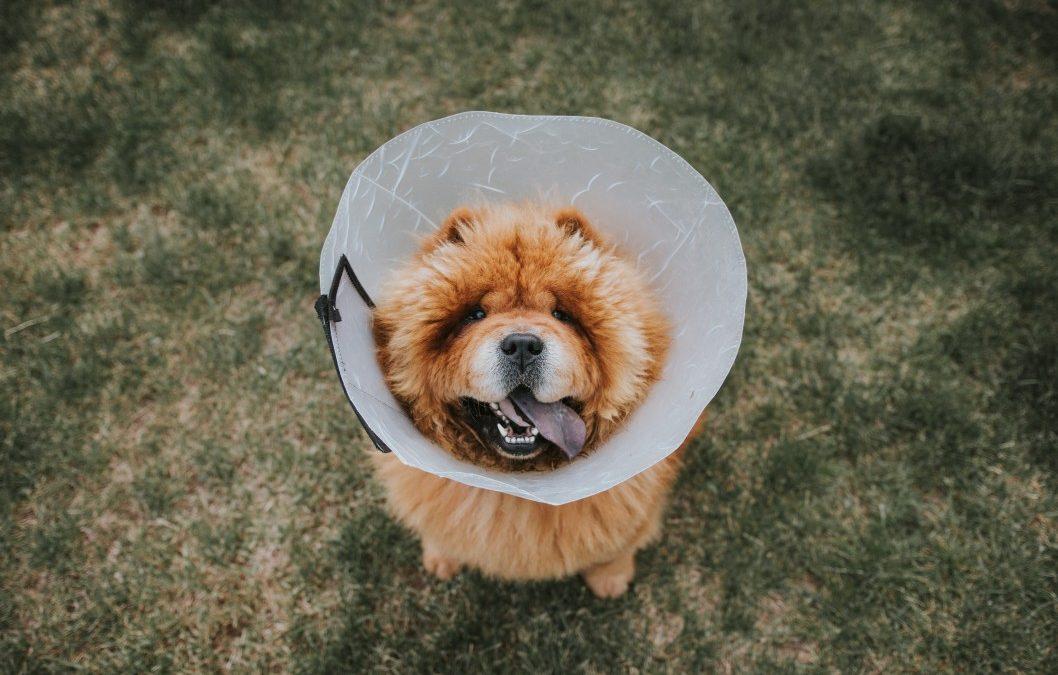 Faut-il souscrire une mutuelle santé pour son animal ?