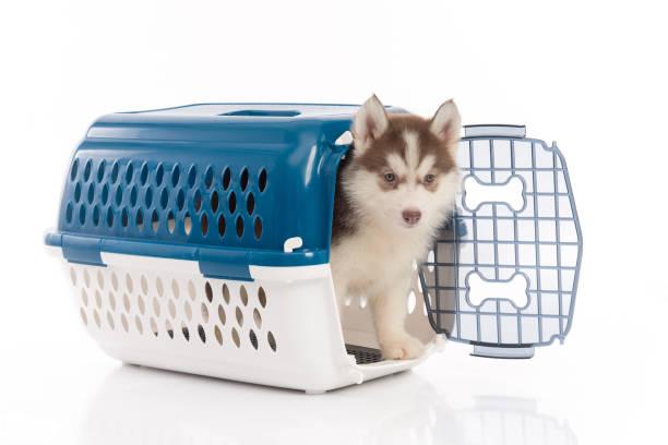 La cage pour chien, un accessoire qui devient indispensable